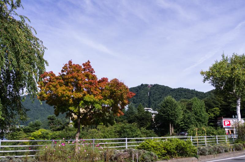 Red tree, Kawaguchi-Ko