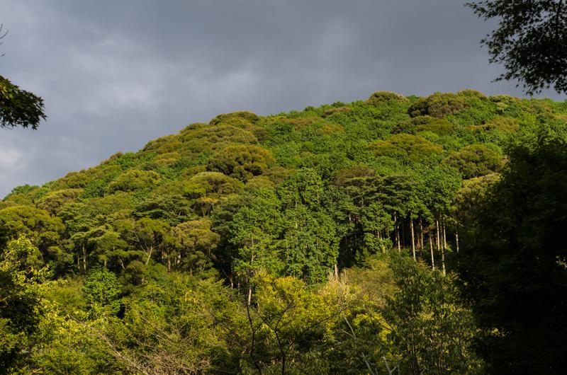 Green Hills Kyomizu-Dera, Kyoto