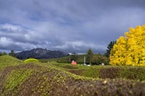 Mount Roland, Tasmazia