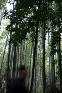 Arashiyama: Ghost in the bamboo forest