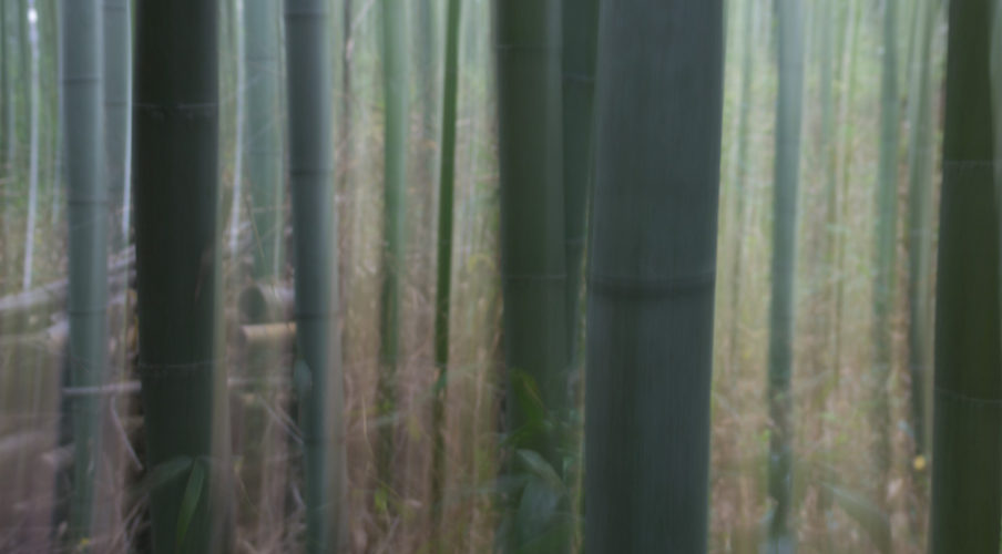 Arashiyama: Bamboo abstract?