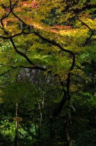Eikando-ji: Koyo