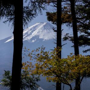 Mount Fuji Koyo: Japan