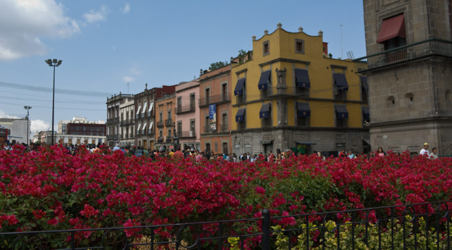 Mexico City: Flowers