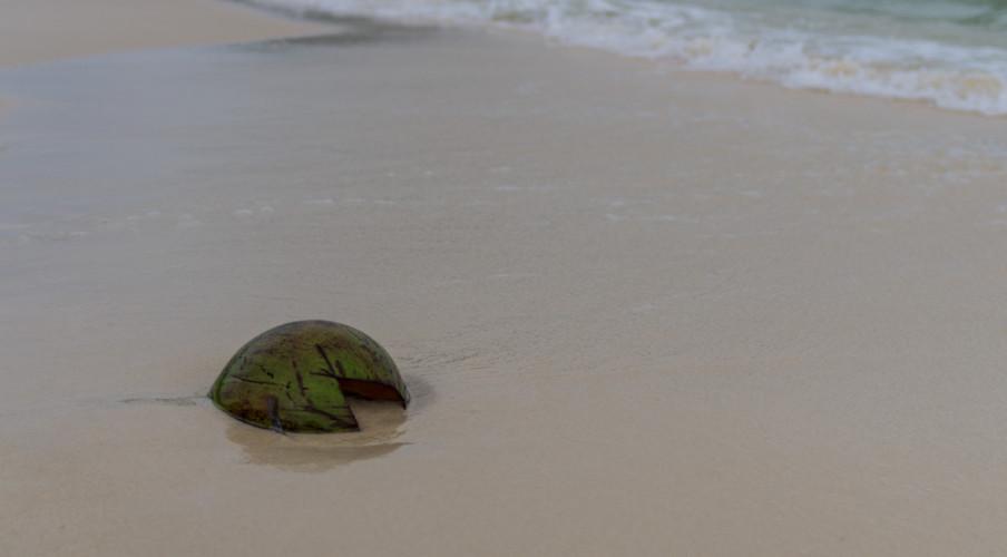 Coconut on Sao Beach
