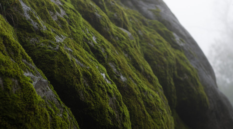 Mossy rock, Canyon Track
