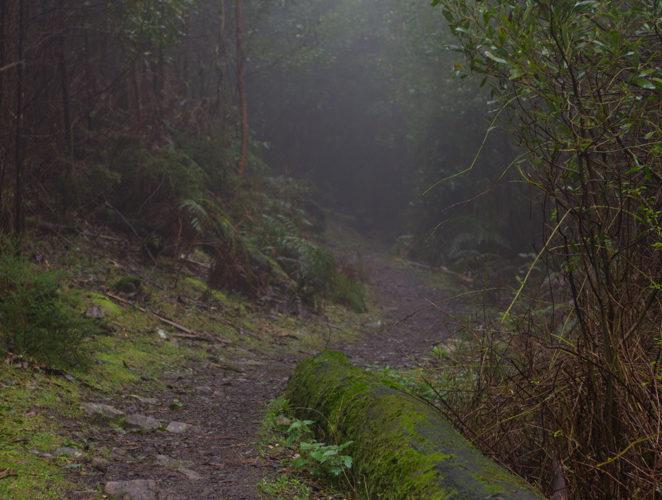 Canyon Track