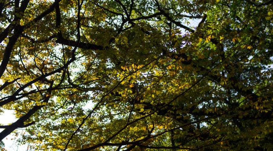 Autumn is coming, Hiroshima War Memorial Peace Park