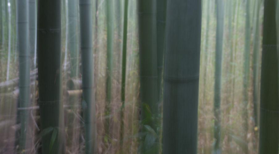 Arashiyama: Bamboo abstract?